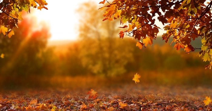 5 Affirmations for Embracing Fall - Peaceful Mind Peaceful Life